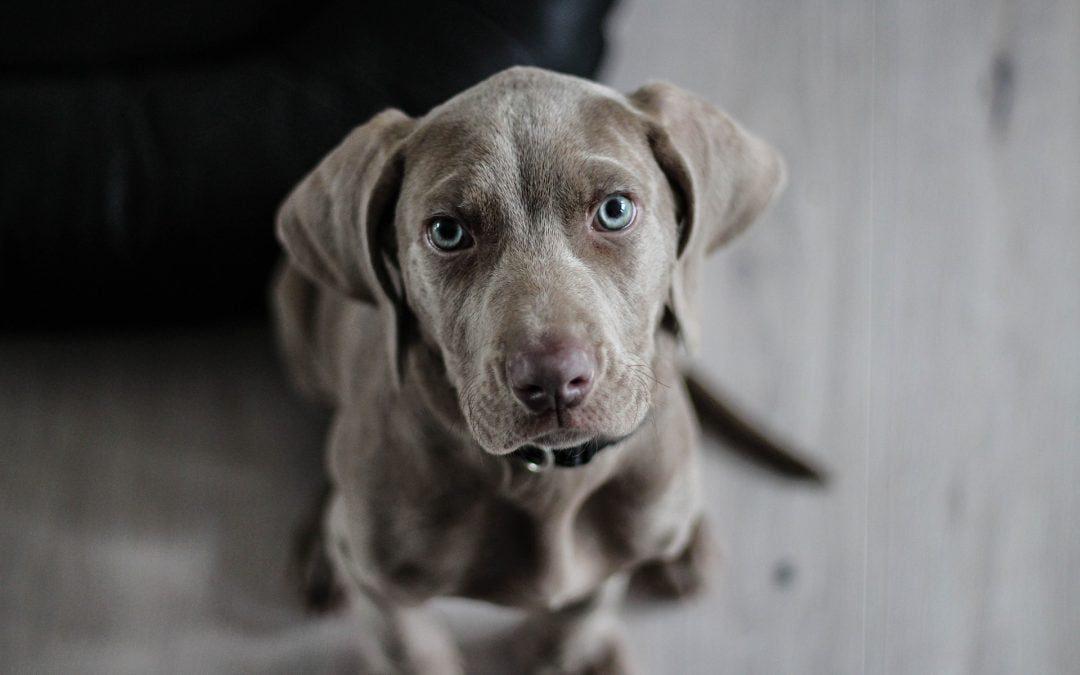 Get Affordable Pet Insurance