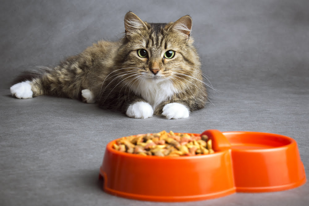 The Ultimate Cat Food Buying Guide
